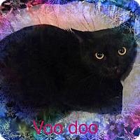 Adopt A Pet :: Voodoo - Bedford Hills, NY