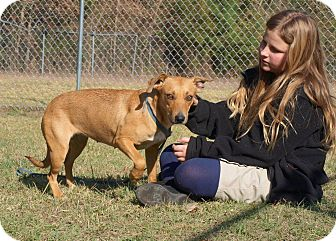 Terrier (Unknown Type, Medium) Mix Dog for adoption in Oakdale, Louisiana - Mary
