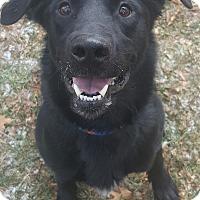 Adopt A Pet :: Turbo - Oakland, MI