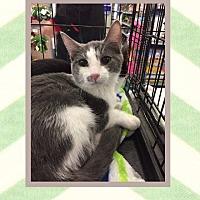 Adopt A Pet :: Herman - Mansfield, TX