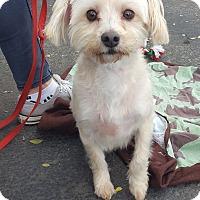 Adopt A Pet :: Henry - Canoga Park, CA