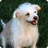 Adopt A Pet :: WILLOW - Mission Viejo, CA