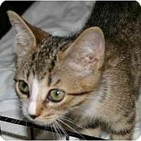 Adopt A Pet :: Piper - Montgomery, IL