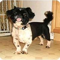 Adopt A Pet :: Wesley - Mooy, AL