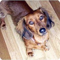 Adopt A Pet :: Beau - San Jose, CA