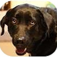 Adopt A Pet :: Missy - Hamilton, ON