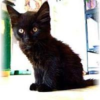 Adopt A Pet :: Cindy - Shelton, WA