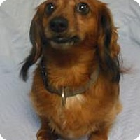 Adopt A Pet :: Roper - Gary, IN