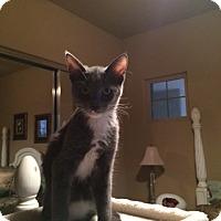 Adopt A Pet :: JACK - Higley, AZ