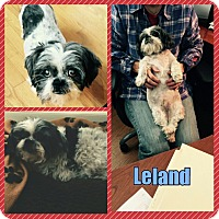 Adopt A Pet :: Leland - bridgeport, CT