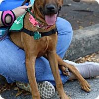 Adopt A Pet :: Julep - Alpharetta, GA