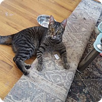 Adopt A Pet :: Tigg (MP) - Little Falls, NJ