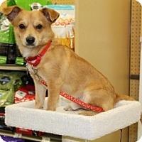 Adopt A Pet :: GIZZY - Albany, NY
