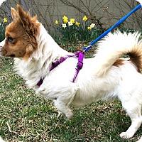 Adopt A Pet :: Ryder-ADOPTION PENDING - Boulder, CO