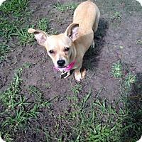 Adopt A Pet :: Mali - Houston, TX