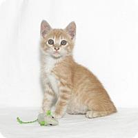Adopt A Pet :: Nigel - Lufkin, TX