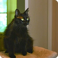 Adopt A Pet :: Panther - Houston, TX