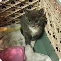 Adopt A Pet :: casey - Glen cove, NY