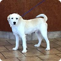 Adopt A Pet :: I'M ADOPTED Casper Soenke - Oswego, IL