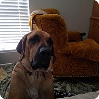 Adopt A Pet :: Mia - Goodyear, AZ
