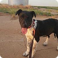 Adopt A Pet :: Emma - Crosbyton, TX