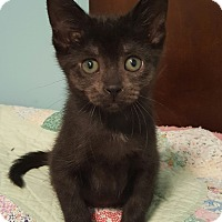 Adopt A Pet :: Luna - Highland, IN