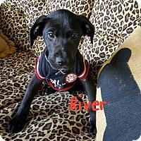Adopt A Pet :: River - Hopkinton, MA