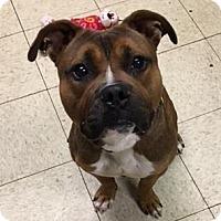 Adopt A Pet :: Brutus - Cleveland, OH