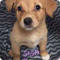 Adopt A Pet :: Sunny - Spring, TX