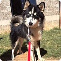 Adopt A Pet :: Rodrigo Santoro - Jersey City, NJ