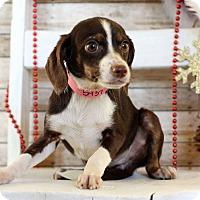 Adopt A Pet :: Leesa - Waldorf, MD