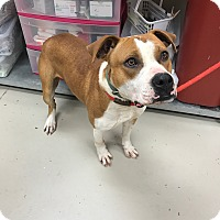 Adopt A Pet :: Van - Decatur, AL
