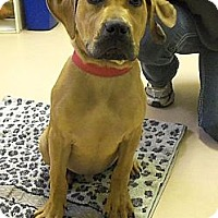 Adopt A Pet :: Fonzi - Brattleboro, VT
