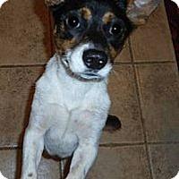 Adopt A Pet :: Beans - Glen Burnie, MD