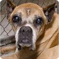 Adopt A Pet :: Aunt Bee - Albany, GA