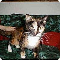 Adopt A Pet :: Heide - Proctor, MN