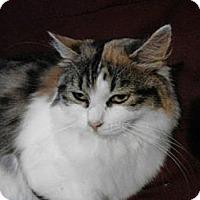 Adopt A Pet :: Celia - Norwich, NY
