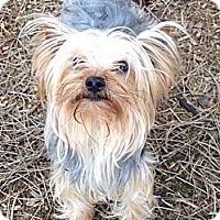 Adopt A Pet :: Oly - Salem, OR