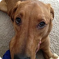 Adopt A Pet :: Annie - Wasilla, AK