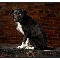 Adopt A Pet :: Meg - Owensboro, KY