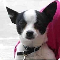 Adopt A Pet :: Skeeter - Braintree, MA