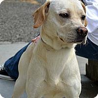 Adopt A Pet :: Rosey - Leesburg, VA