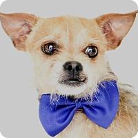 Adopt A Pet :: Sapo - Orlando, FL