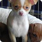 Adopt A Pet :: Pugsley