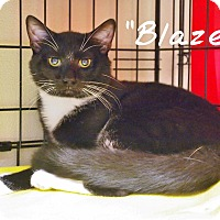 Adopt A Pet :: Blaze - Ocean City, NJ