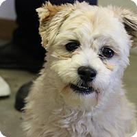 Adopt A Pet :: Chancy - Brattleboro, VT