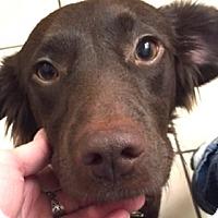 Adopt A Pet :: BETSY - Pine Grove, PA