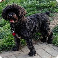 Adopt A Pet :: Prince - Willingboro, NJ