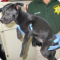 Adopt A Pet :: Jumanji - Lewisburg, TN