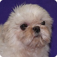Adopt A Pet :: Bei Bei/ 5 lbs.! - REDDING, CA